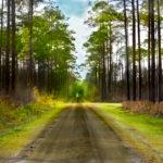 nature_road