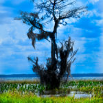 nature_tree
