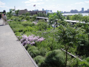 A photograph of a planting bed on the High Line in summer. Most plants are green with leaves and a few are blooming with pink and purple flowers.
