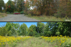 A before/after image collage. The top image shows a gravel and asphalt road cutting through a meadow with trees in the background. The bottom image shows the restored meadow once the road was removed. The new meadow is noticeably shorter and greener than the surrounding meadow.