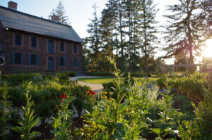 In focus in the foreground are several young plants with flowers. Out of the focus in the background, the historic brick Mansion, circular lawn, and tall pine trees can be seen.