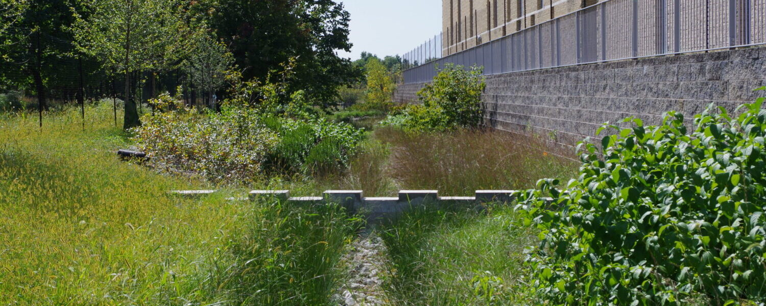 A shorter concrete weir peaks out from green and bronze plantings around the bioswale.