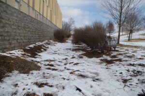 A photograph of the future bioswale location. Snow is on the ground, and two lines of tall shrubs, separated by several feet, extend away from the viewer.