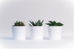 three-green-assorted-plants-in-white-ceramic-pots-776656