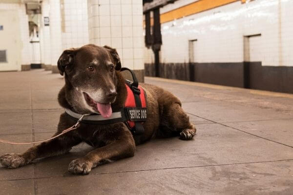 identify pets with RFID tag on a flight