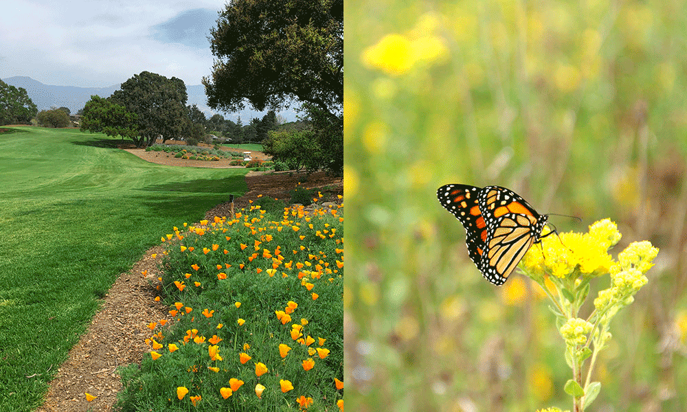Monarchs in the Rough