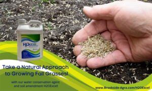 Natural approach to fall grasses Brookside Agra