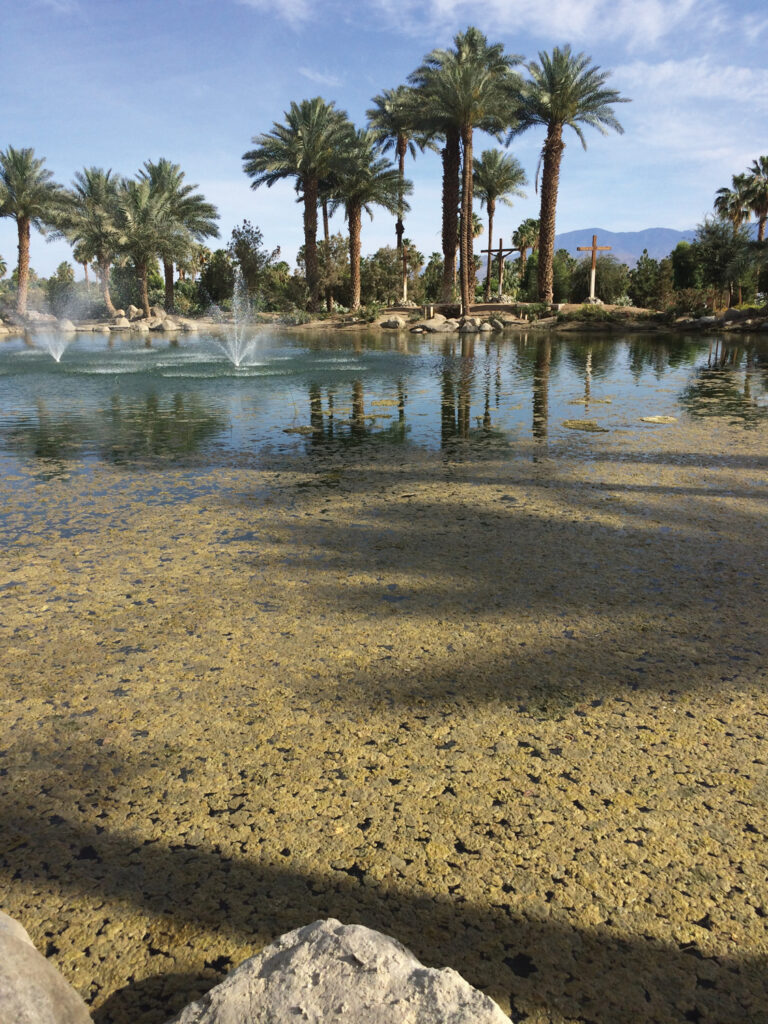 Lyngbya in Desert