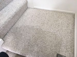 carpet cleaning hollywood hills