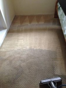 carpet cleaning pacific palisades
