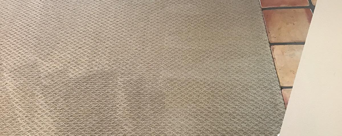 carpet cleaner near me