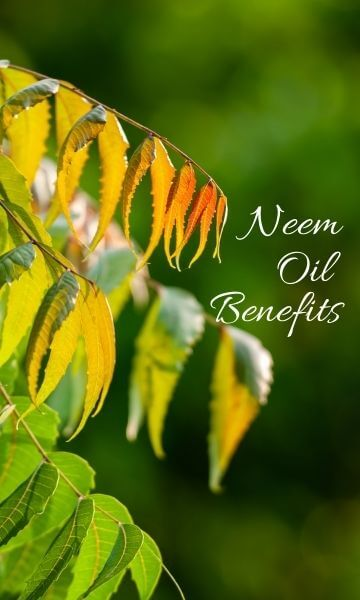 Image of Neem leaves and text Neem oil benefits