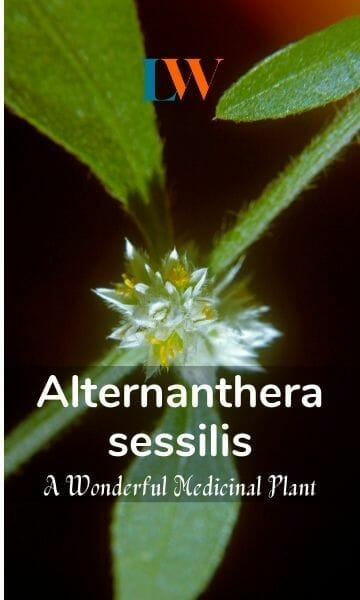 Alternanthera sessilis – A Wonderful Medicinal Plant