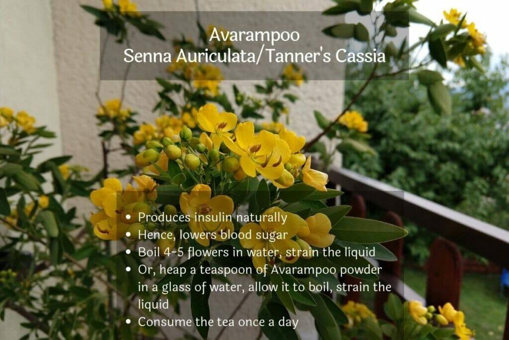 Image of Avarampoo (Senna Auriculata effective home remedy for diabetes