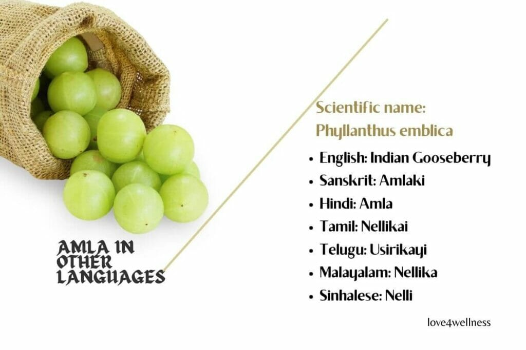 Infographic of Amla in other languages