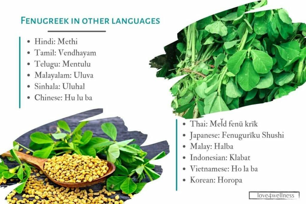 Fenugreek as called in various languages
