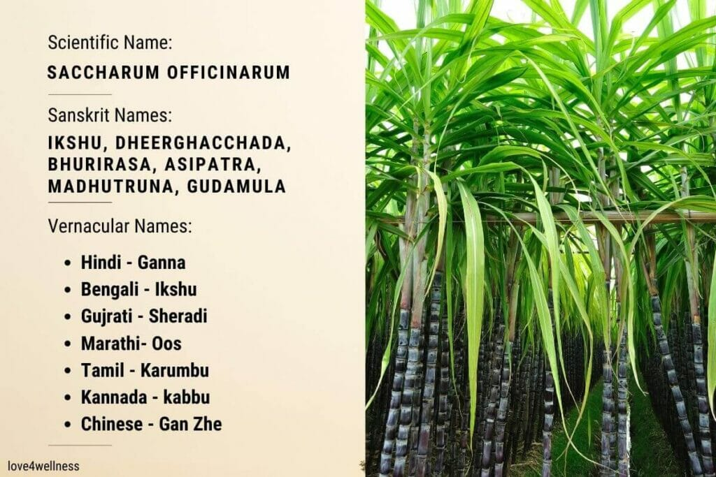 Infographic containing scientific and vernacular names of sugarcane