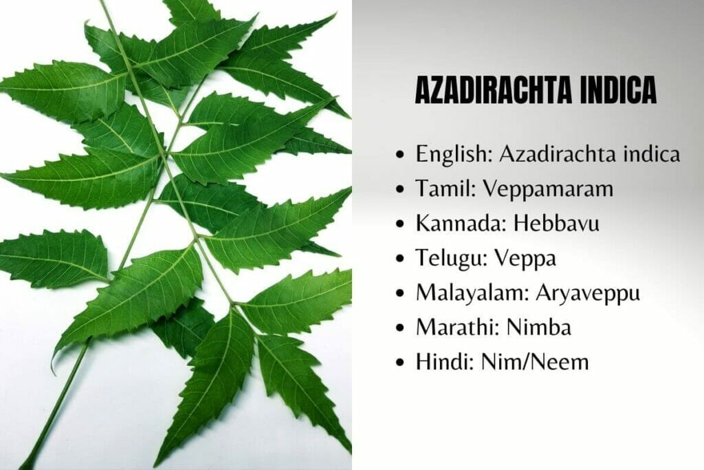 Neem in other languages