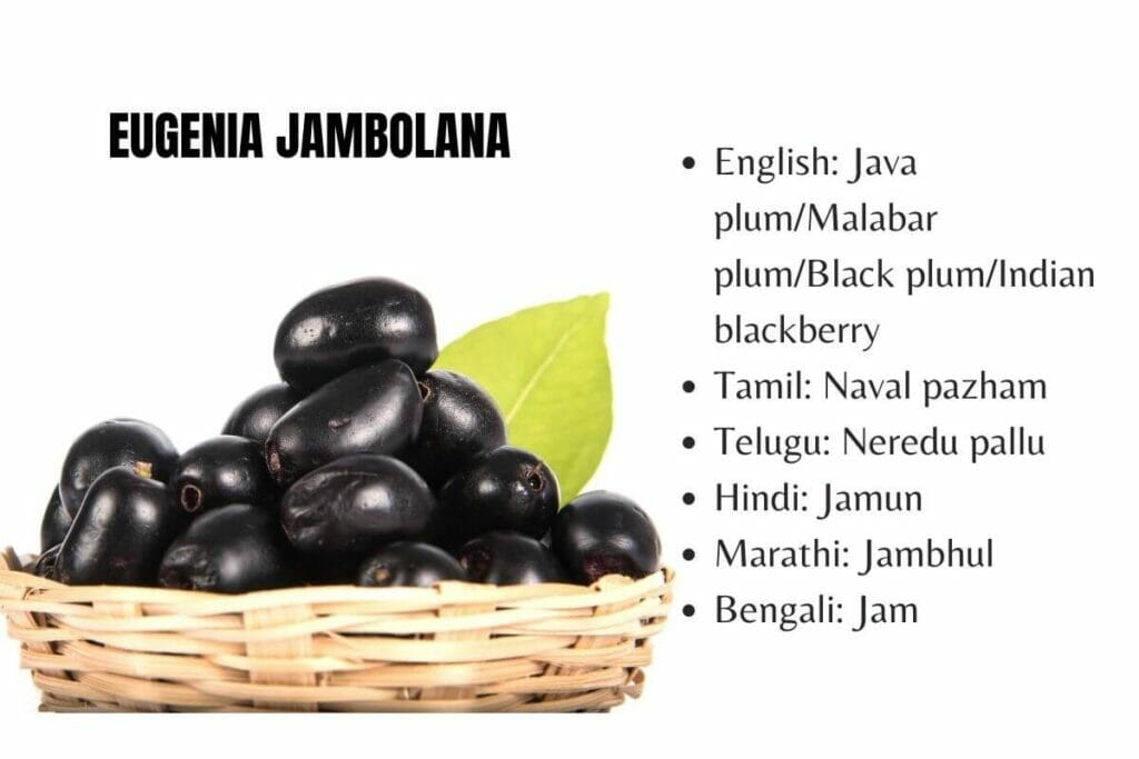 Diabetes remedy Jamun/Java plum in other languages