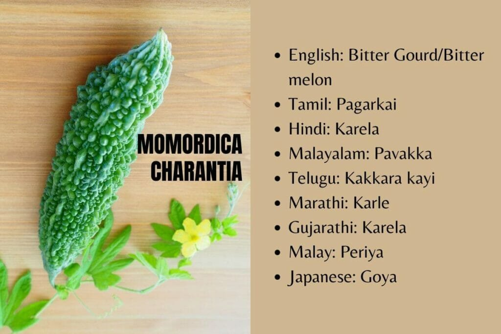 Bitter gourd in other languages