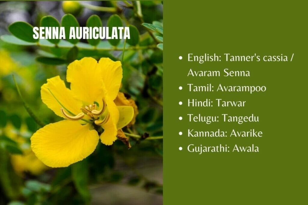 Senna auriculata diabetes remedy herb other names