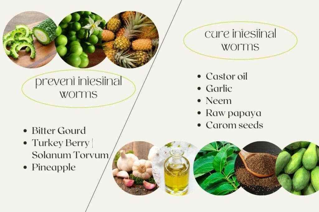 Natural home remedies for intestinal worms prevention and cure