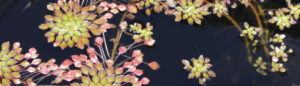 cropped-IMG_3902-2.jpg