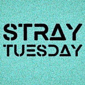 Stray Tuesday