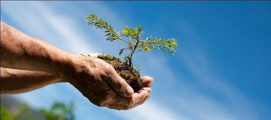 Why To Plant Trees