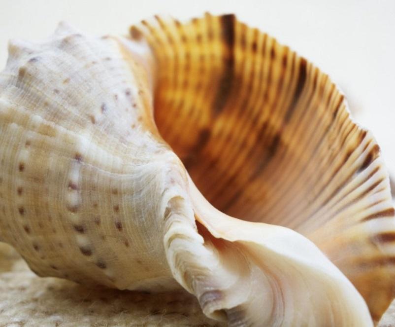 sea-shell-1506994131TWf