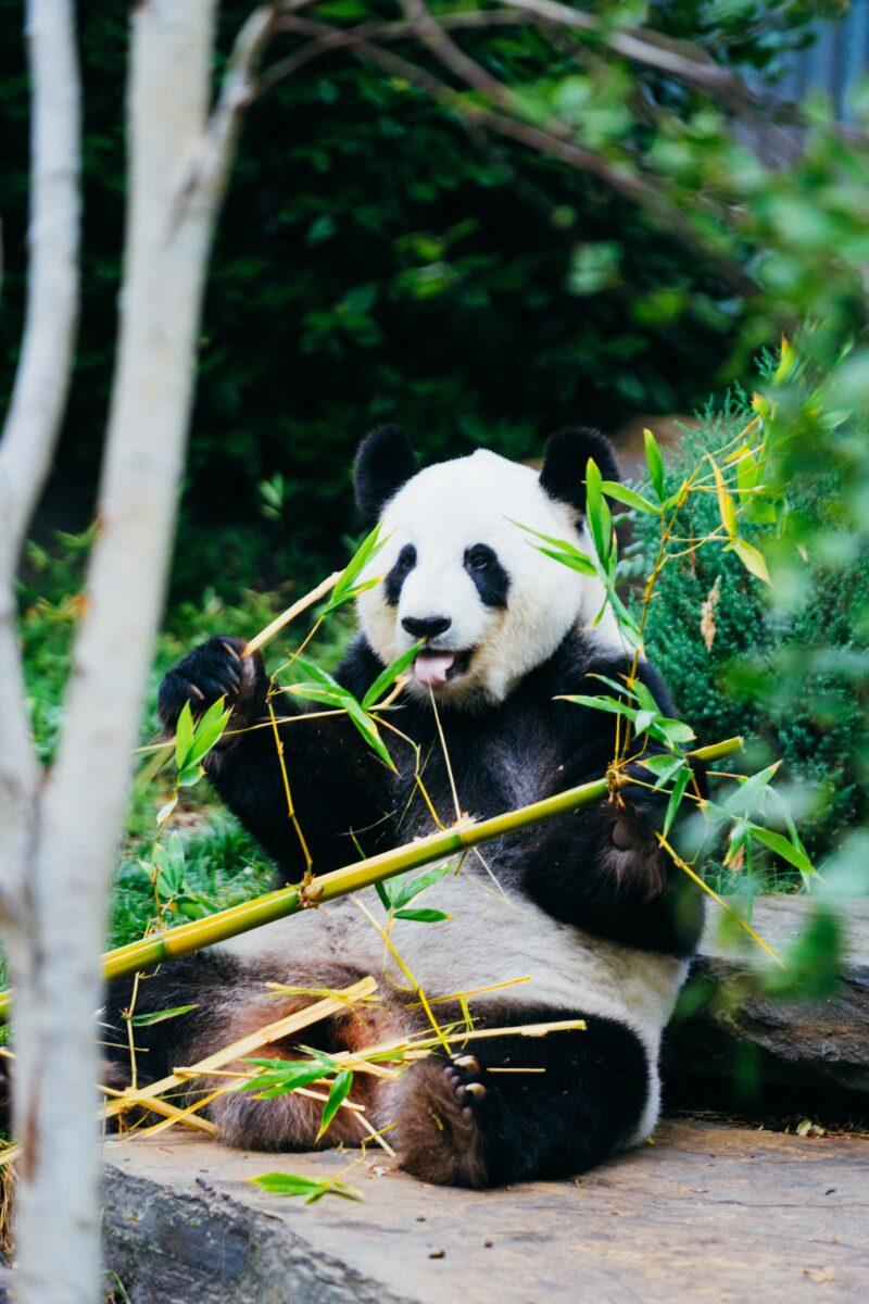 support the world wildlife fund