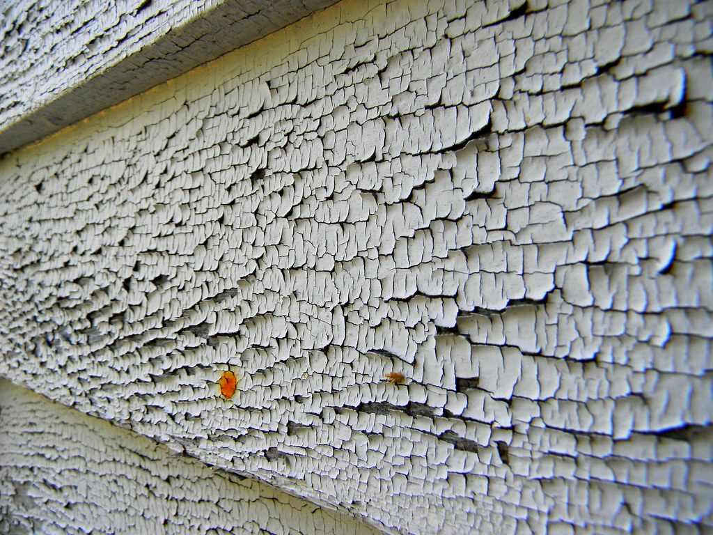 HOW TO FIX ALLIGATORING PAINT