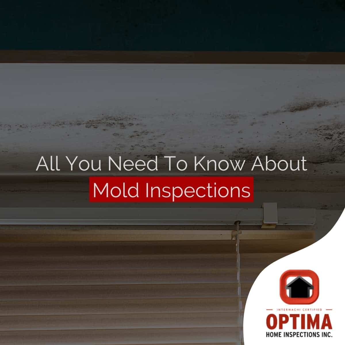 All You Need To Know About Mold Inspections