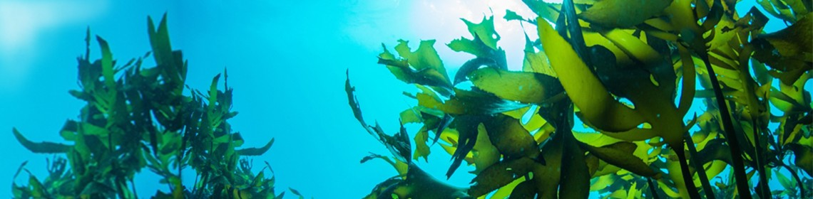 CAN SEAWEED CURE ENDOMETRIOSIS AND BREAST CANCER?