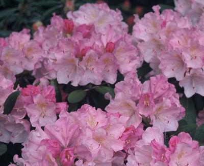 Ken Janeck bloom