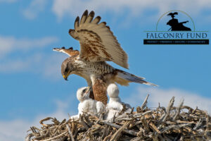 To improve or foster protection of wild raptors and quarry species and their habitats...