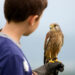 15317557 - youngster holding a hawk
