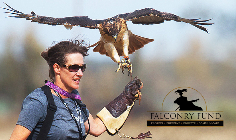 What Is Falconry