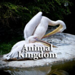 Animal Kingdom Questions and Answers