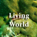 Living World Questions and Answers