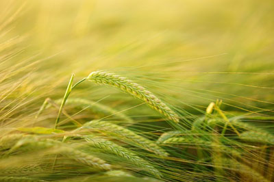 Agriculture Questions and Answers