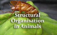 Structural Organisation in Animals
