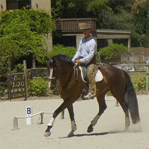 Horsemanship Clinic @ Carmel Valley Trail & Saddle Club | Carmel Valley | California | United States