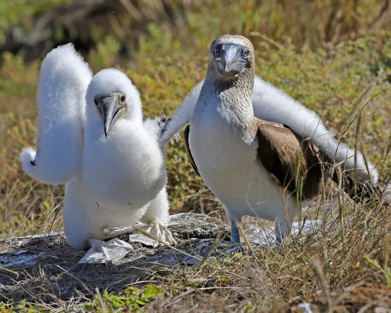Galapagos Islands, Ecuador-1
