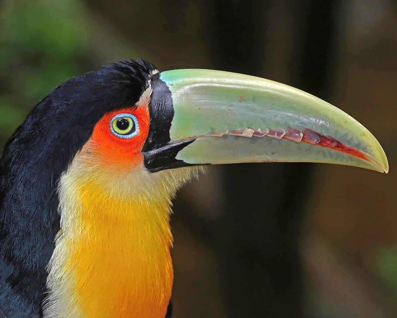 Tropical Gems of Panama-1