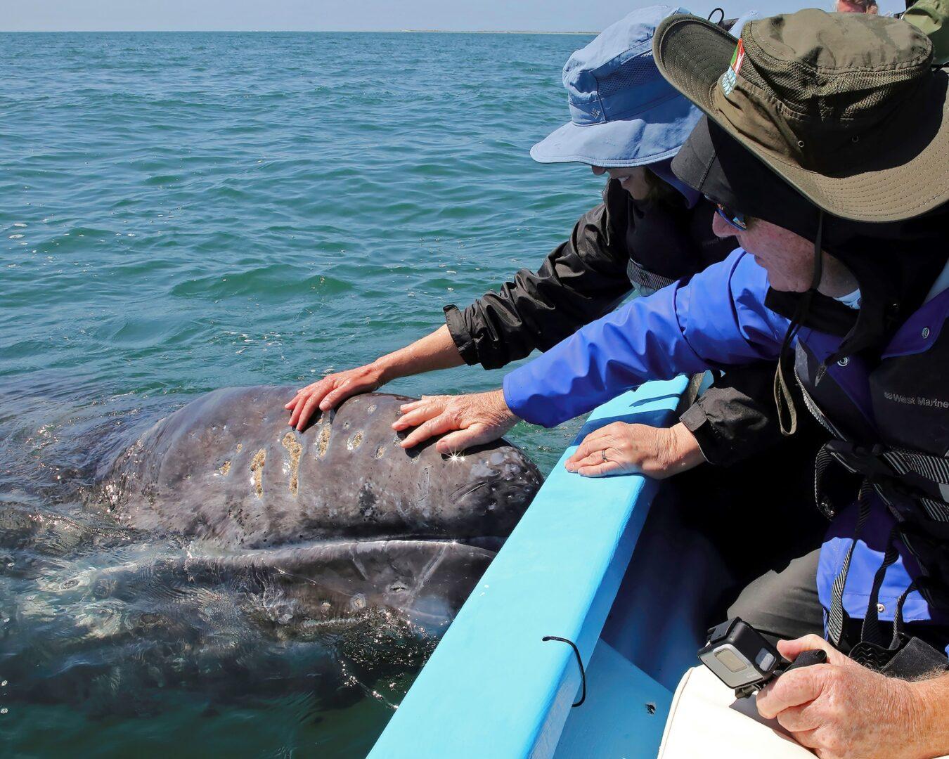 Whales of Baja-img-1