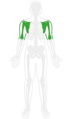 Orthopedic Shoulder Pain