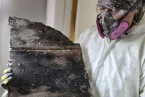 Most dangerous mold species