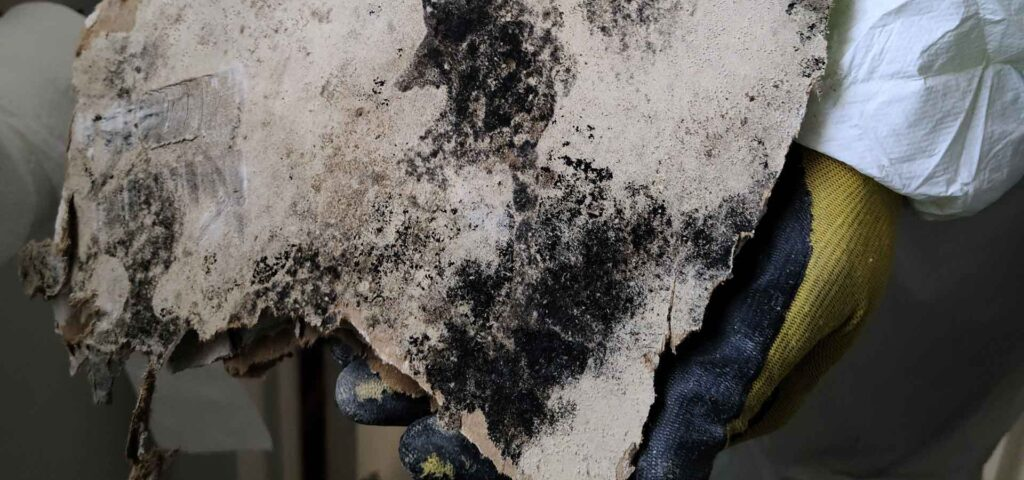 mold remediation dry out restorations