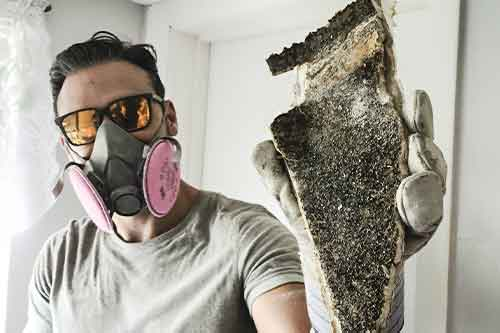 What to do if you are Stuck in a Moldy House